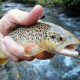 Three Reasons to Give Fly Fishing a Try 2