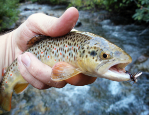 Three Reasons to Give Fly Fishing a Try 1