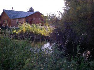 native tall grass near cabin