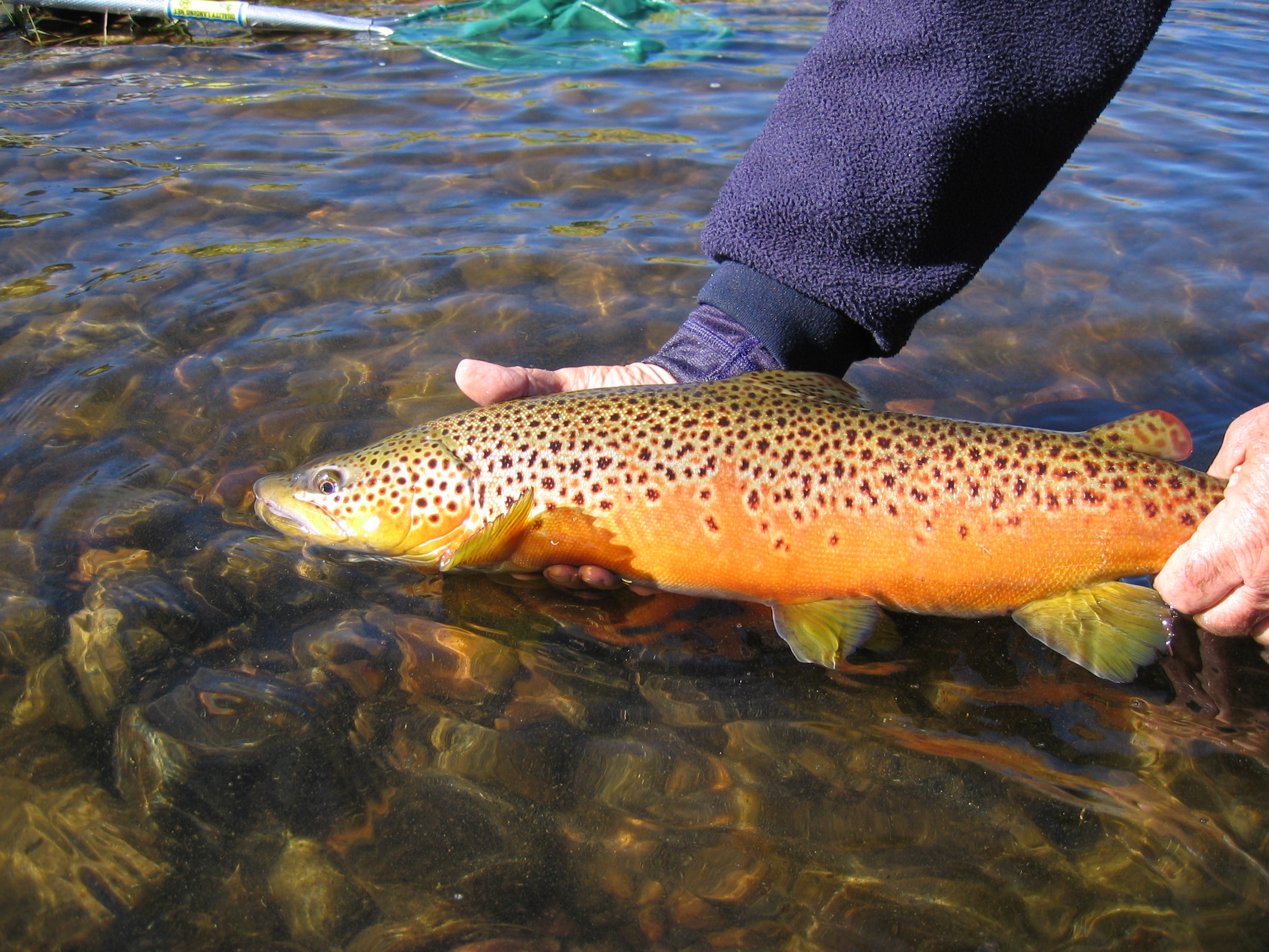 Madison river backcountry angler for How to fish for trout in a river