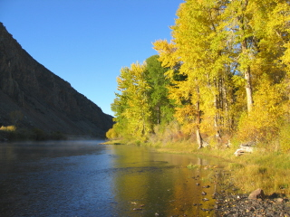 cotton wood trees in fall color on the Big Holrriver